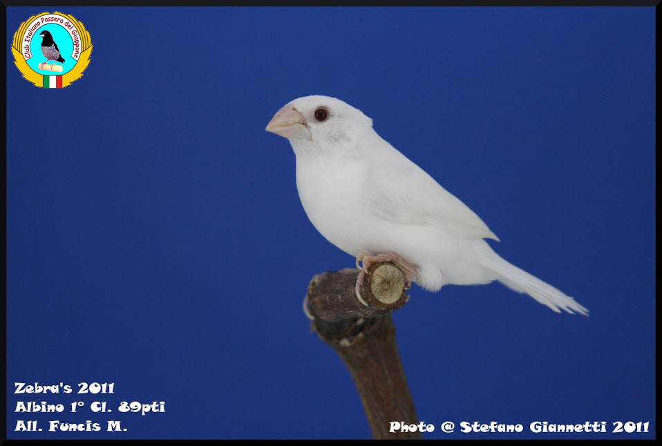 http://www.passerodelgiappone.it/images/mutazioni/apigmentato_1.JPG