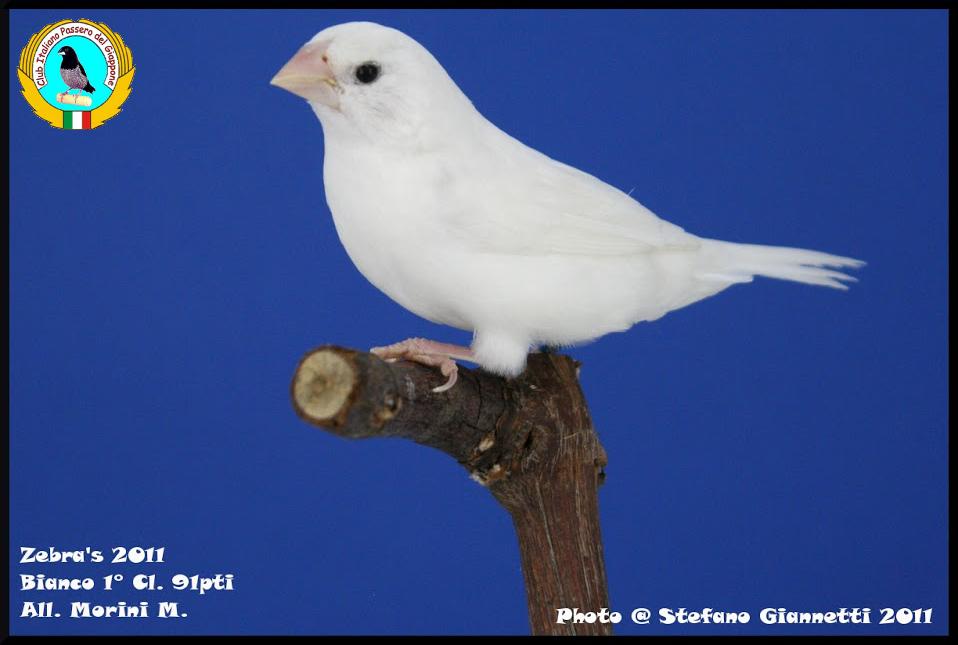 http://www.passerodelgiappone.it/images/mutazioni/bianco_2.JPG