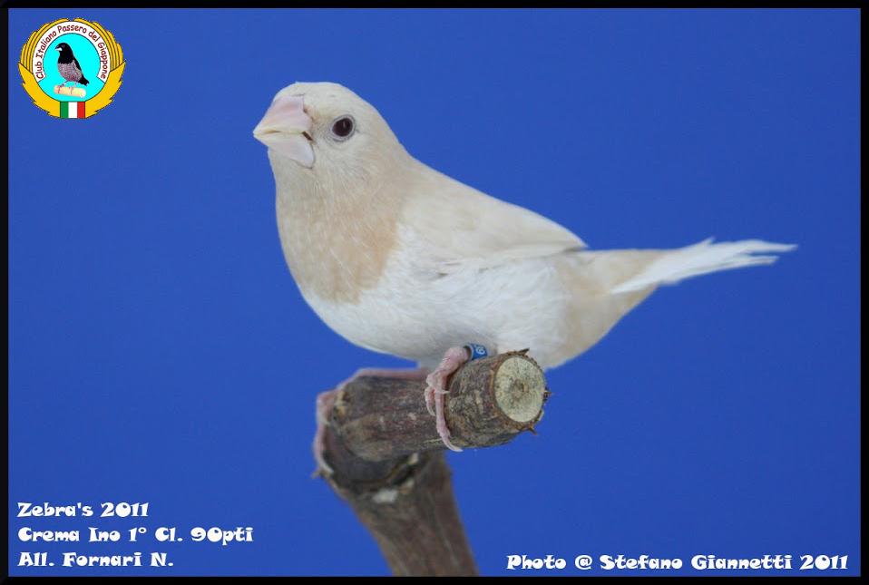 http://www.passerodelgiappone.it/images/mutazioni/cremaino_1.JPG
