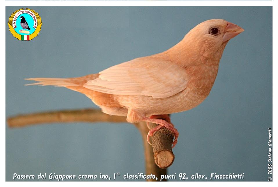 http://www.passerodelgiappone.it/images/mutazioni/cremaino_2.JPG