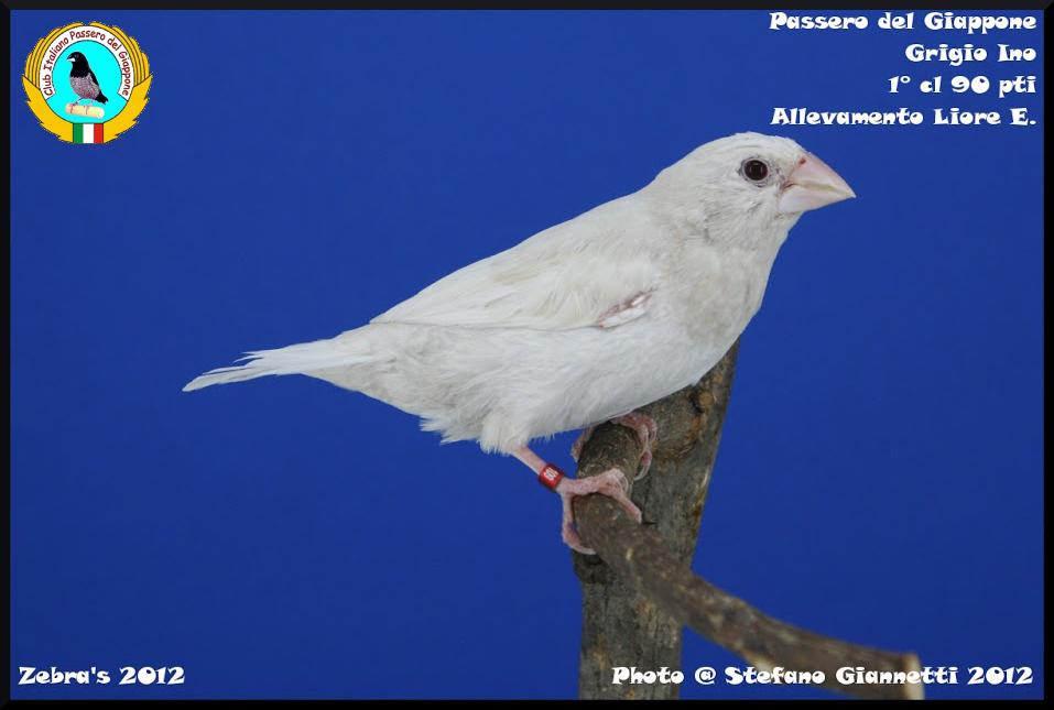 http://www.passerodelgiappone.it/images/mutazioni/greyino_1.JPG