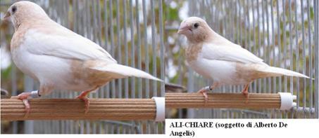 http://www.passerodelgiappone.it/images/stories/mutazioni/mut12.jpg