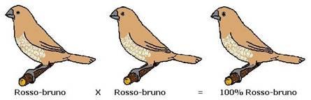 http://www.passerodelgiappone.it/images/stories/mutazioni/mut_schema02.jpg