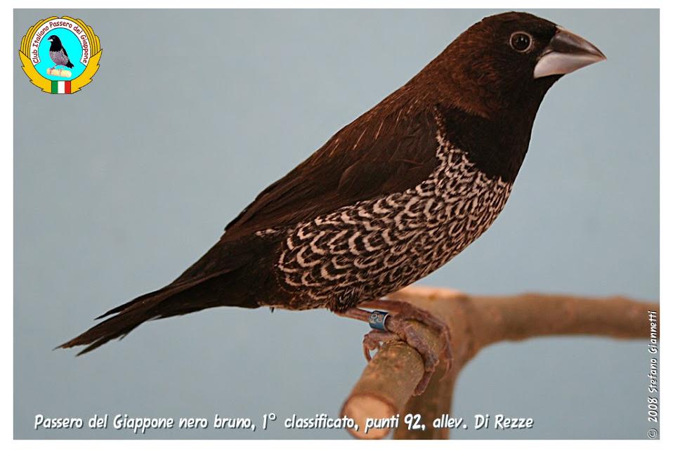 http://www.passerodelgiappone.it/images/mutazioni/nerobruno_3.JPG