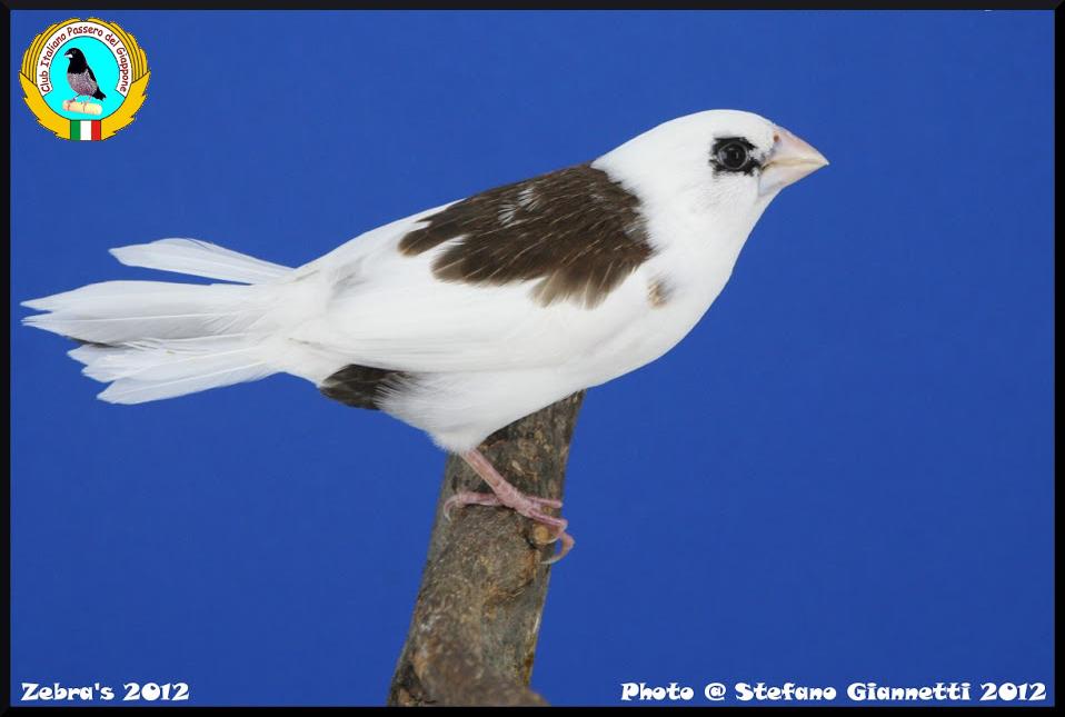 http://www.passerodelgiappone.it/images/mutazioni/scudato_3.JPG